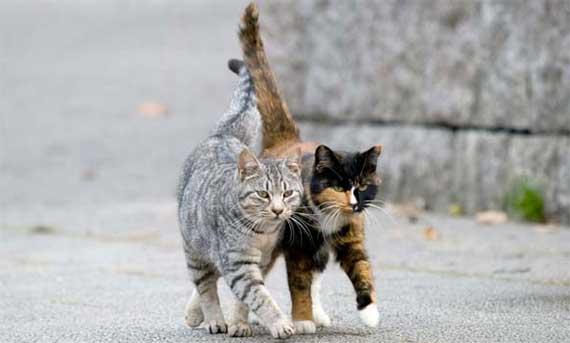 fondo per l'assistenza ai gatti che vivono liberi