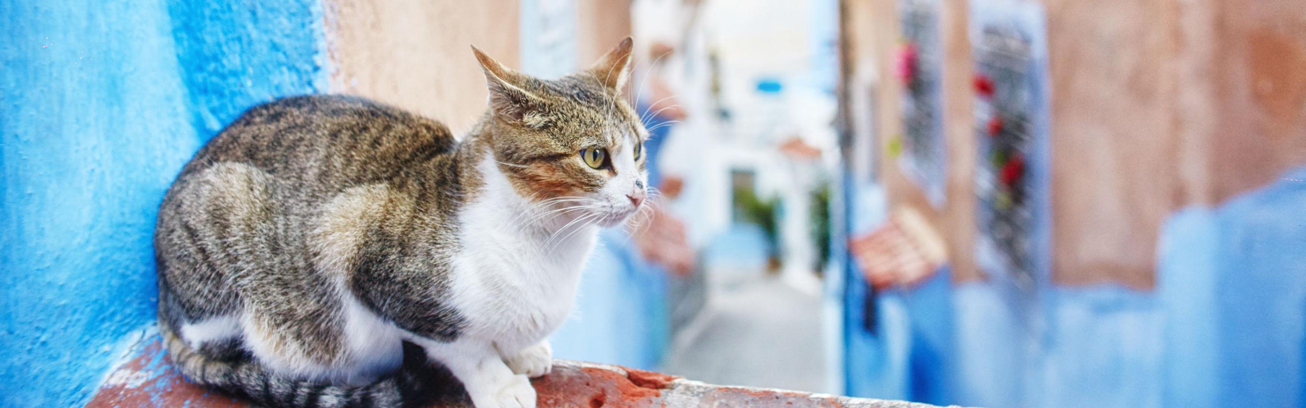 Per le adozioni dei gatti:
